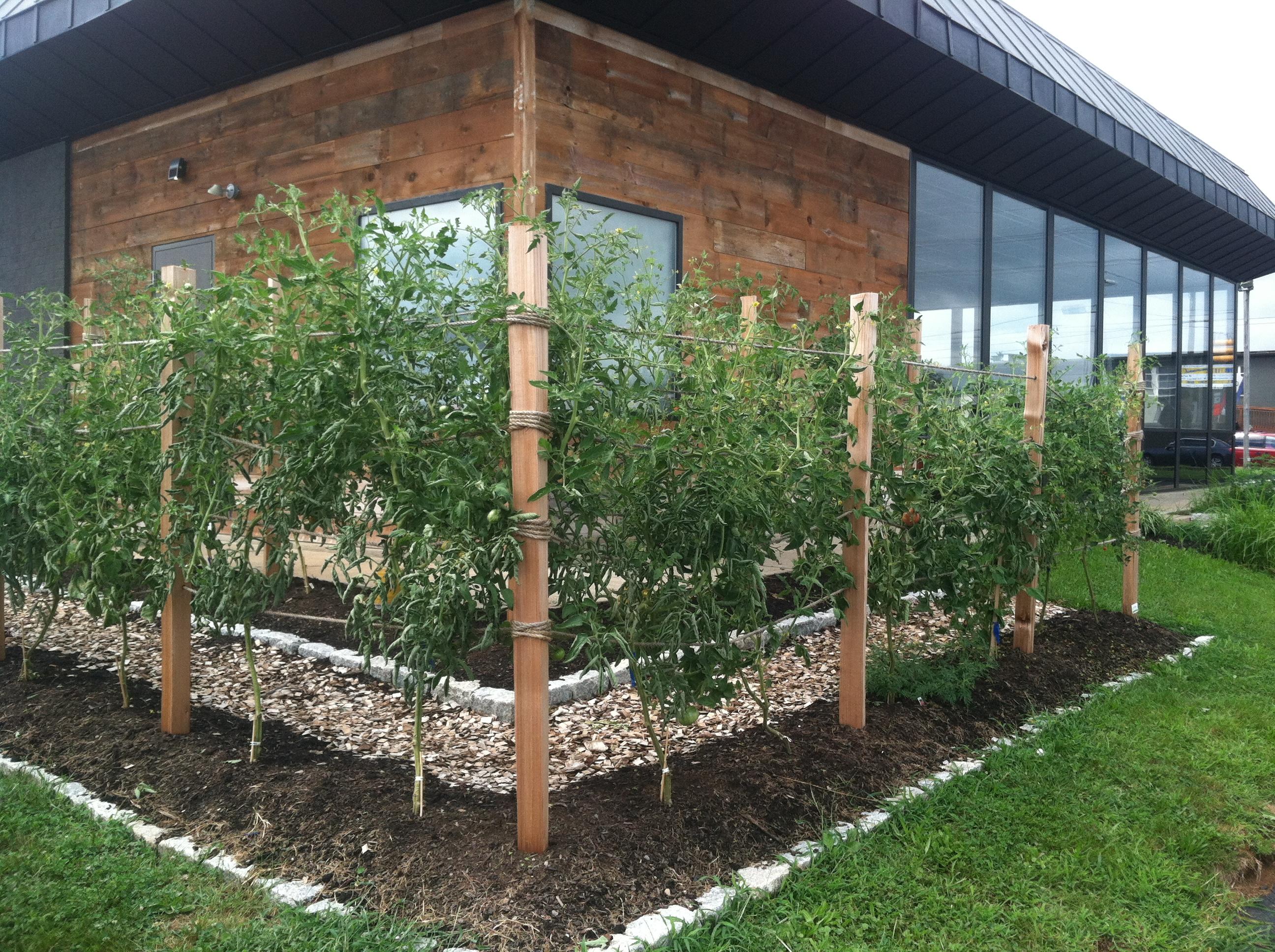 Ecologiadesign ecologia design Tomato garden design