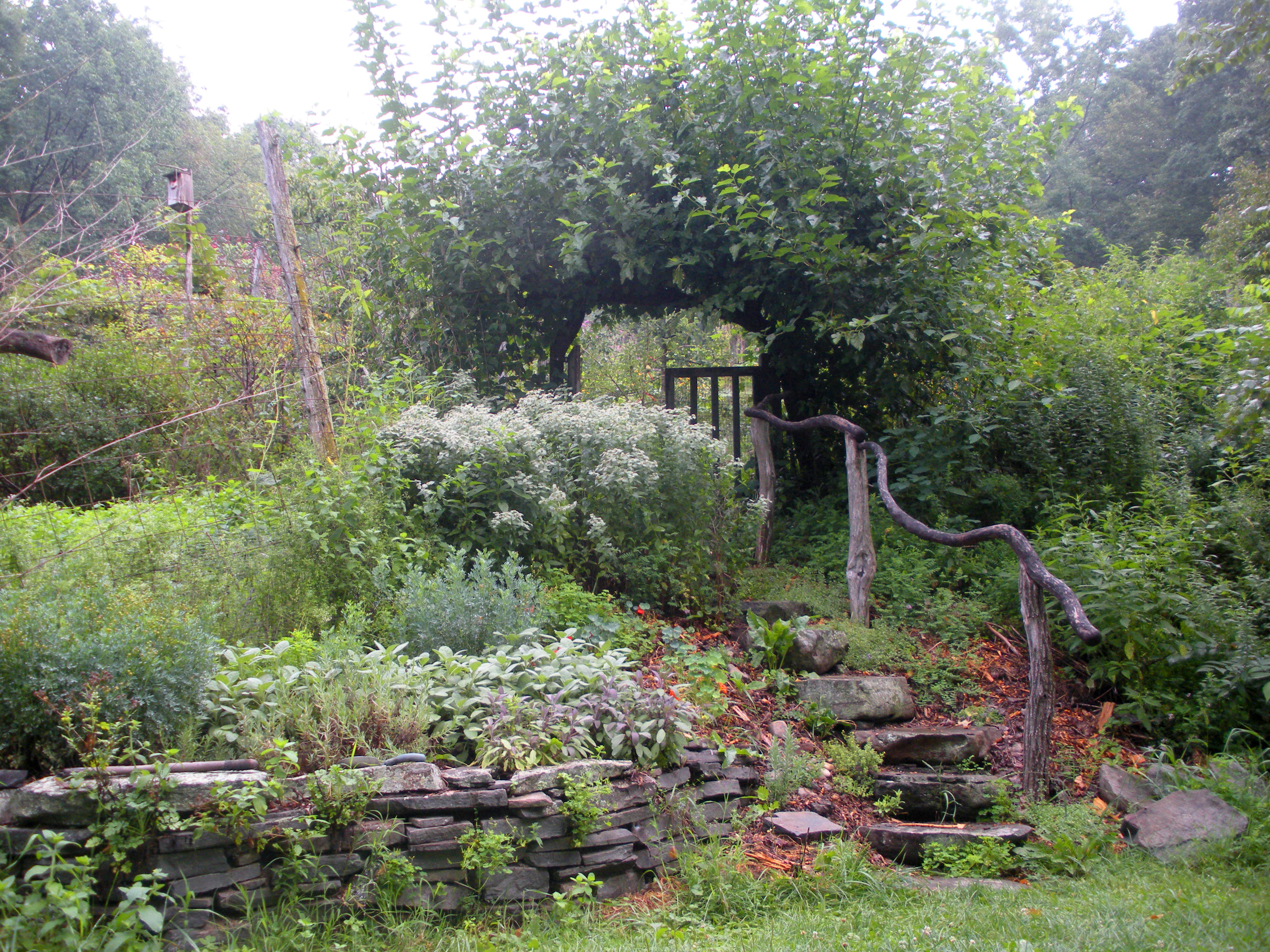 Growing Fruit at Home - Starting a Food Forest | Ecologia ...