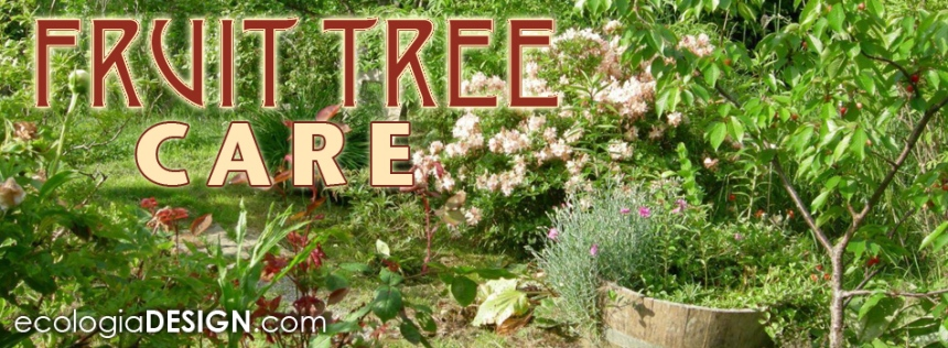 Organic fruit tree gardening pruning shaping